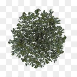 Shrub, Leaf, Branching, Tree PNG image with transparent background