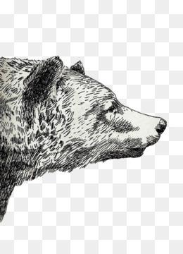 Mexican Bear Tumblr