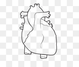 Free Download Coloring Book Anatomy Heart Human Body Human Body