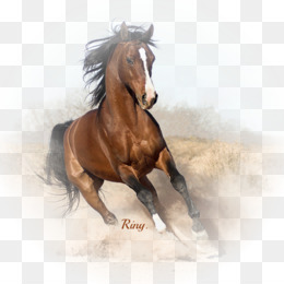 Free Download Arabian Horse Canadian Horse Gallop Horse Breed Black