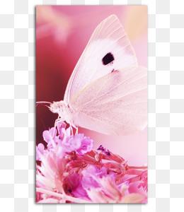 Scaricare Gratuito Sfondo Del Desktop Apple Iphone 7 Plus Farfalla