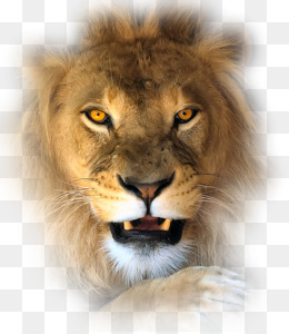 Aslan PNG Transparent Clipart Free Download