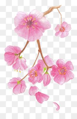 Flor De Sakura Dibujo A Lapiz