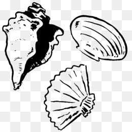 Free Download Clam Seashell Coloring Book Drawing Oyster Seashell Png