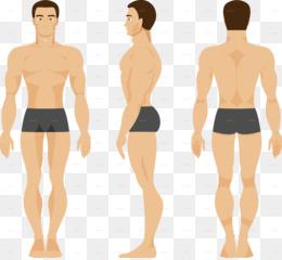 3822f8b5ffc5b Human Body PNG   Human Body Transparent Clipart Free Download ...