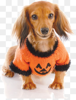 Free Download Miniature Dachshund Puppy German Wirehaired Pointer