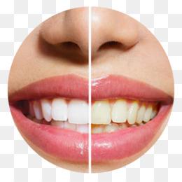 Gigi Putih Png Gambar Unduh Gigi Putih Gambar Transparan Png Lee