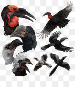 Burung Enggang Png Gambar Unduh Burung Enggang Gambar Transparan