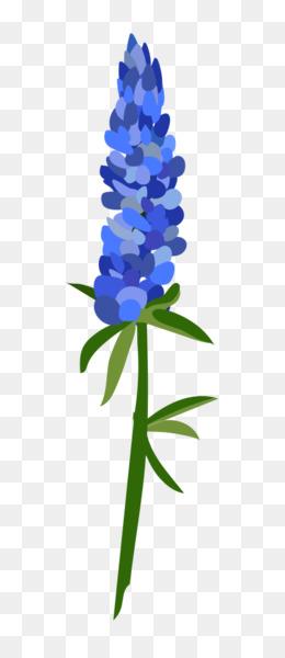 Bluebonnet PNG transparente y Bluebonnet dibujo - Texas bluebonnet ...