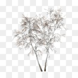 Free download Birch Tree png
