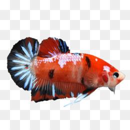 Ikan Sirip Png Gambar Unduh Ikan Sirip Gambar Transparan Png
