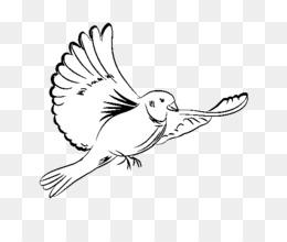 ücretsiz Indirin Kitap çizim Resim Boyama Güvercinler Güvercinler