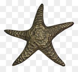 7be17bbe31b Patch bordado Estrela-do-mar de Roupas Amazon.com Esportes - símbolo de