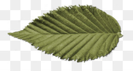 Symmetry, Nature, Leaf PNG image with transparent background