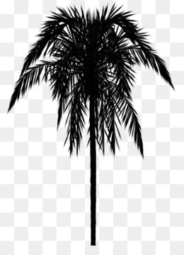 Asian Palmyra Palm Tree Wallpaper Border Trees