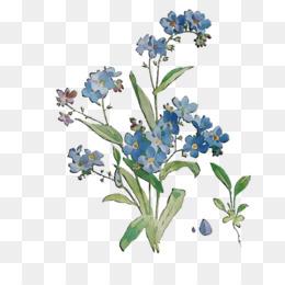 Scorpion Grasses, Bluebonnet, Cut Flowers, Flower, Flowering Plant PNG image with transparent background