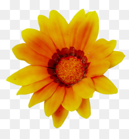Flower Fields, Sunflower, Transvaal Daisy, Flower, Petal PNG image with transparent background