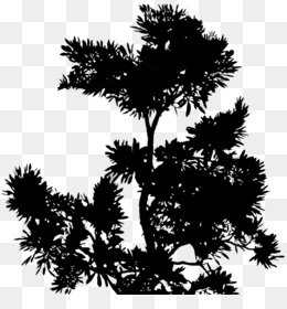 Nature Sustainability, Architecture, Philosophy Of Architecture, Tree, White Pine PNG image with transparent background