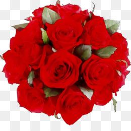 Garden Roses, Flower, Floral Design, Rose PNG image with transparent background