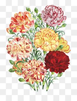 Carnation, Floral Design, Flower, Flowering Plant PNG image with transparent background