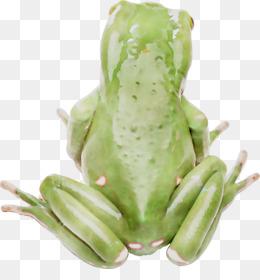 Frog, True Frog, Tree Frog, Amphibian, Plant PNG image with transparent background