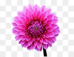 Painting, Flower, Desktop Wallpaper, Flowering Plant PNG image with transparent background