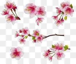 Moth Orchids, Floral Design, Cut Flowers, Flower, Plant PNG image with transparent background