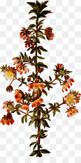 Twig, Plant Stem, Flower, Plant PNG image with transparent background