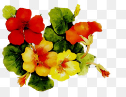 Annual Plant, Herbaceous Plant, Violet, Flower, Flowering Plant PNG image with transparent background