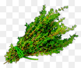 Herb, Thyme, Garden Thyme, Plant, Aquarium Decor PNG image with transparent background