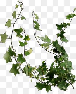 Plant Stem, Grape, Leaf, Plant, Flower PNG image with transparent background