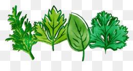 Leaf, Greens, Herb, Plant PNG image with transparent background