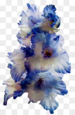 Gladiolus, Cut Flowers, Flower, Blue PNG image with transparent background