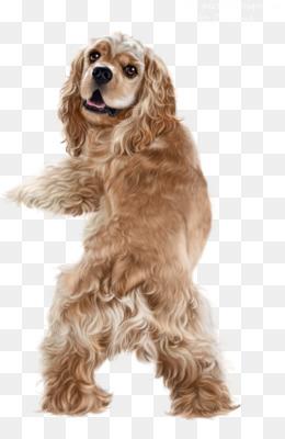 d46b520092e Welsh Springer Spaniel Cavalier King Charles Spaniel Puppy Dog breed -.  1322 654. 3. 0. PNG