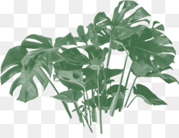 Swiss cheese plant Vine Houseplant Plants Philodendron - 854