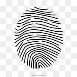 Multi Colored Fingerprint Without Watermark PNG and Multi Colored