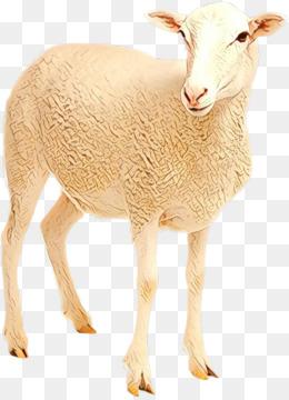 Free download Toggenburg goat Barbari goat Livestock
