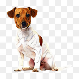 Free download Parson Russell Terrier Jack Russell Terrier